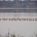 Ruta ornitològica per l'Estany d'Ivars i Vila-sana