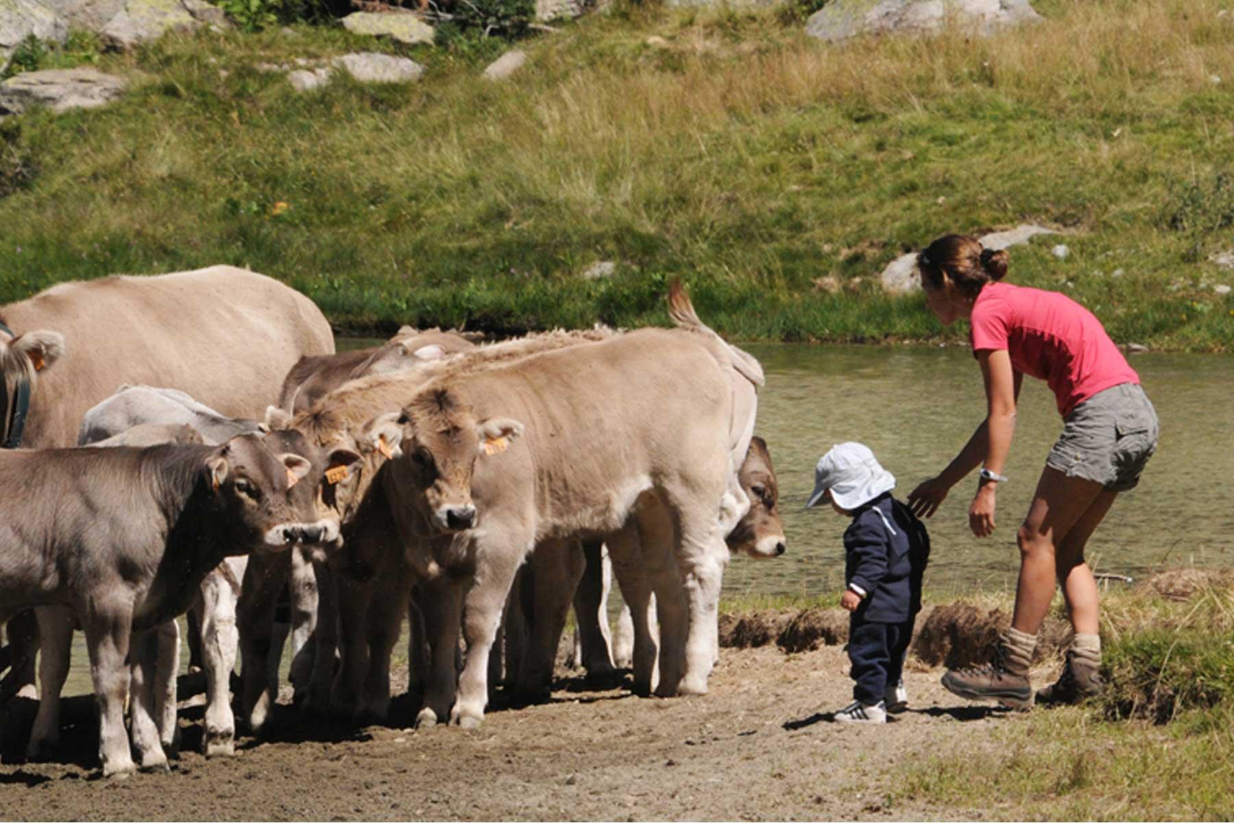 Campanya per conciliar la convivència entre el turisme i el sector primari i ramader